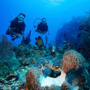 fotografía submarina claves