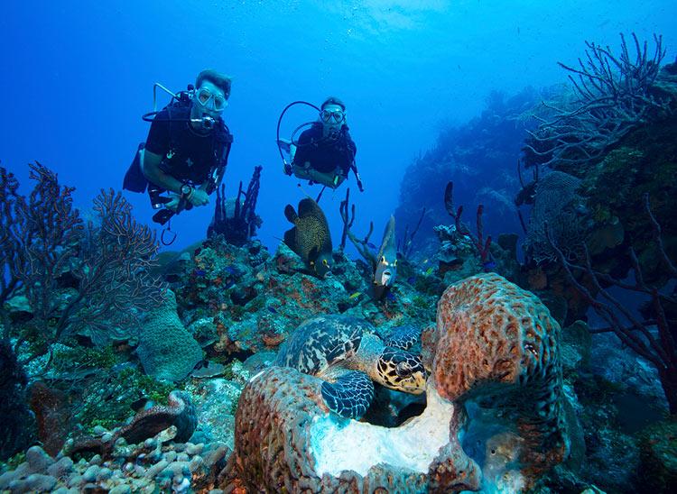 ¿Qué es la fotografía submarina? Naturaleza bajo el agua