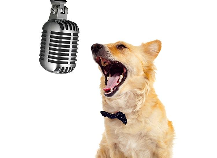 El doblaje de Mascotas: voces animalizadas
